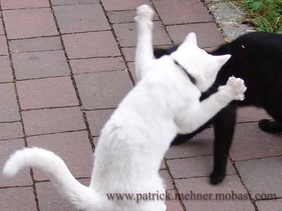 Katzen Angriff